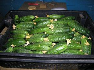 Огурцы маринованные в томате и острые