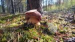 Интересные и аппетитные блюда из замороженных белых грибов